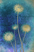 Photomontage Digital Art - Dandelions by Nicole Neuefeind