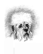 Dogs Drawings - Dandie Dinmont Terrier by Lou Ortiz