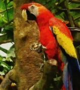 Danse Macaw Print by Jeff Kolker