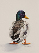 Drake Paintings - Dapper Dabbler by Helen Shideler