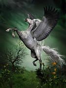 Corey Ford - Dapple Grey Pegasus