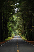Avenue Of The Giants Prints - Dark Canopy Print by Lucy Basch