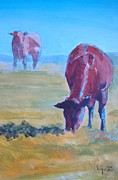 Mike Jory Cow Posters - Dark Chestnut Brown Cow grazing in the sun Poster by Mike Jory