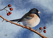 Feathers Paintings - Dark-eyed Junco by Crista Forest