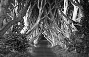 Dark Hedges Prints - Dark Hedges B W Print by Anna Stephens