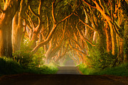 Dark Hedges Posters - Dark Hedges - Northern Ireland Poster by Przemyslaw Zdrojewski