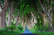 Bregagh Framed Prints - Dark Hedges Warm Framed Print by Anna Stephens