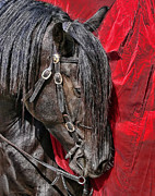 Bridle Art - Dark Horse against Red Dress by Jennie Marie Schell