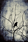 Corvus Brachyrhynchos Prints - Dark Lights Print by Gothicolors And Crows