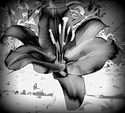 Susan Saver - Dark Lilly