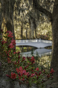 Reflections In River Prints - Dark red Azalea and white bridge Print by Mark Serfass