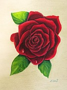 Floral Pictures Painting Prints - Dark Red Rose Print by Zulfiya Stromberg