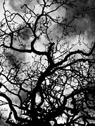 Vicki Spindler - Dark Tree
