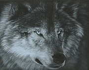 Black Nose Originals - Dark Wolf by Carla Kurt