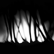 Spooky  Digital Art Originals - Dark woods by Tomasz Wieja