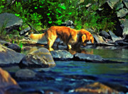 Dog Photo Digital Art - Darn Fishies by Steve Harrington