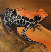 Dart Paintings - Dart Frog by Tara Darby