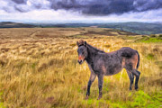 Ponies Digital Art - Dartmoor Pony On The Moors by Mark E Tisdale