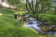 Donald Davis - Dartmoor Stream