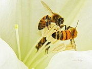 Bees Photos - Datura for Dinner by Chris Berry