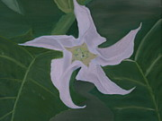Datura Paintings - Datura stramonium by Carmen Cristea