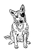 Kelpie Drawings Prints - Dawg Print by Jacqueline Eden