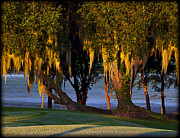 Golf Pyrography Posters - Dawn breaks on Spanish Moss Poster by Kevin Woodbury