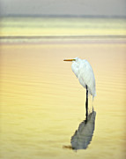 Fort Myers Beach Prints - Dawn Egret Reflection Print by Vicki Jauron