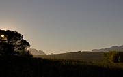 Stellenbosch Photo Posters - Dawn in Cape Town Poster by John Stuart Webbstock