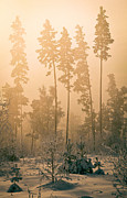 Dawn In The Forest Bashkir Print by  Ilya Moskovets