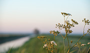 Flevoland Art - Dawn over flowers in spring by Jan Marijs