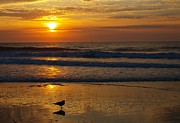 Bird At Sea Photos - Dawn Seagull by Kathleen Palermo