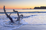 Driftwood Prints - Dawn Tolaga Bay New Zealand Print by Colin and Linda McKie