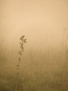 Dawning Mist Print by Tim Good
