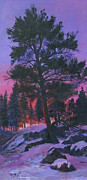 Snow Covered Pine Trees Paintings - Dawns Early Light by Bev Finger
