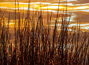 Dawn's Early Light Print by Karen Wiles
