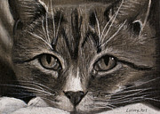 Animal Shelter Drawings - Day 87 ACEO by Alaina Ferguson