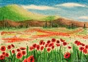 Poppies Field Drawings - Day 89 ACEO by Alaina Ferguson