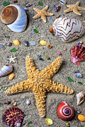 Starfish Prints - Day at the beach Print by Garry Gay