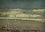Deborah Benoit - Day For The Birds