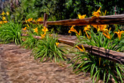 Split Rail Fence Painting Prints - Day Lilies Print by Michael Pickett
