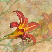 Textured Floral Framed Prints - Day Lily Framed Print by Angie Vogel