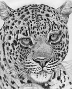 Chelsea Drawings Posters - Daydreaming Leopard Poster by Chelsea Blair