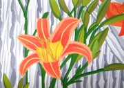 Cecilia Illes - Daylilies