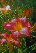 ImagesAsArt Photos And Graphics - Daylily Flowers In The...