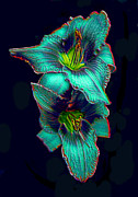 ImagesAsArt Photos And Graphics - Daylily Photo Blooms...