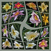 Daylily's Flying Away Collage Print by ImagesAsArt Photos And Graphics