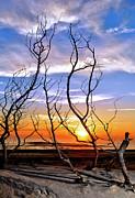 Dan Carmichael - Dead Bush Sunrise II - Outer Banks