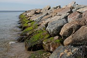 Mashpee Prints - Dead Neck Jetty Print by Allan Morrison