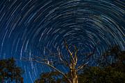 Dead Oak With Star Trails Print by Paul Freidlund
